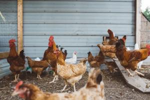 Belgische veevoedersector zag omzet dalen in 2019
