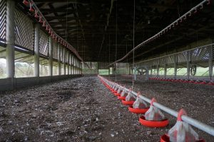 Landbouwbedrijven