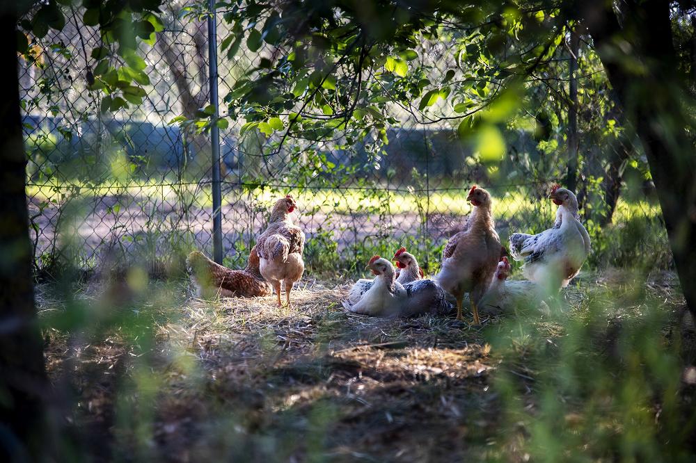 Vlaamse bioloog pleit voor streefwaarden dierenwelzijn