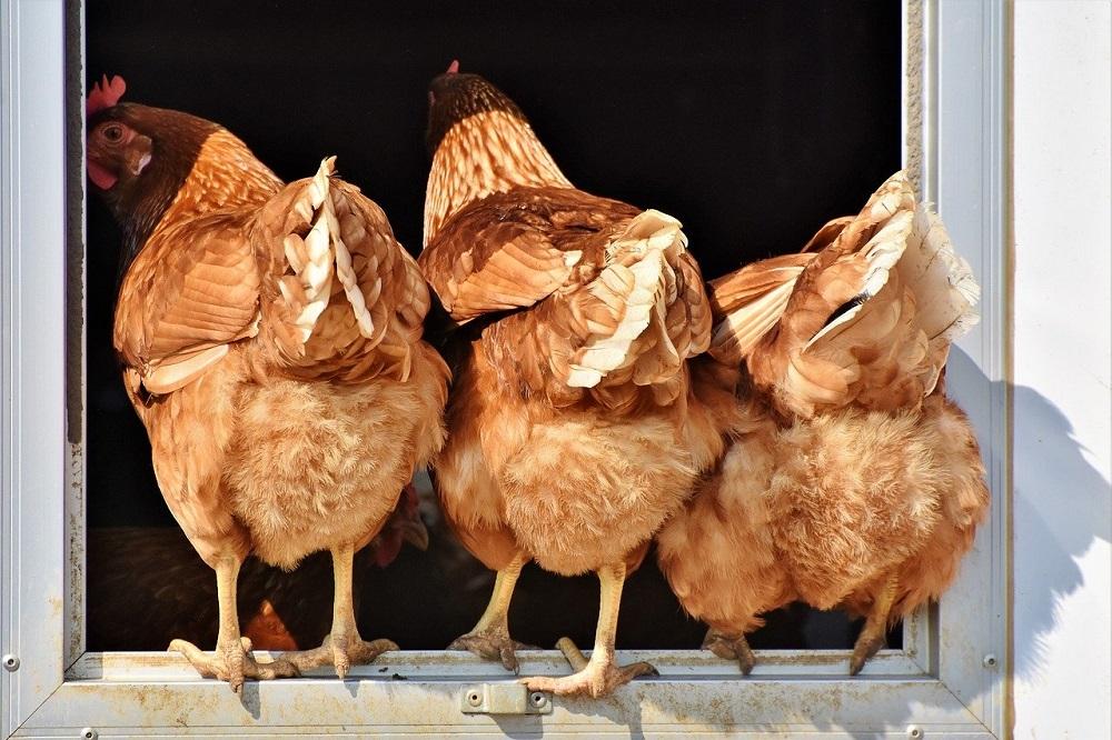 Hoe krijg ik grip op vogelmijt