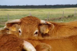 KU Leuven en ILVO willen jeugd inschakelen als landbouwambassadeur