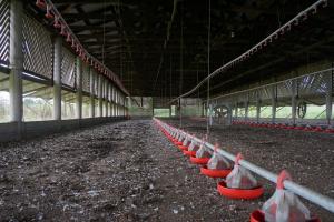 Restricties in België na vogelgriepuitbraak kalkoenbedrijf in Weert